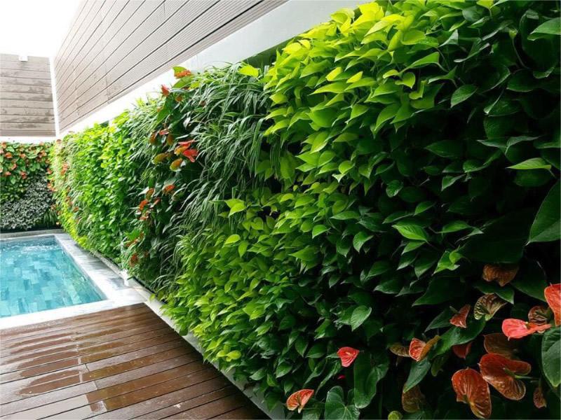 Thi công Tường cây xanh thẳng đứng tại TP Vinh Nghệ An